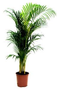 "8 powerful indoor plants to ""grow fresh air"" | smartklean's blog"